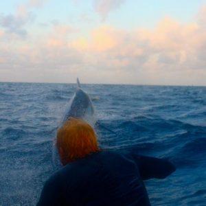 1,100 lbs Black Marlin on the Square Bear